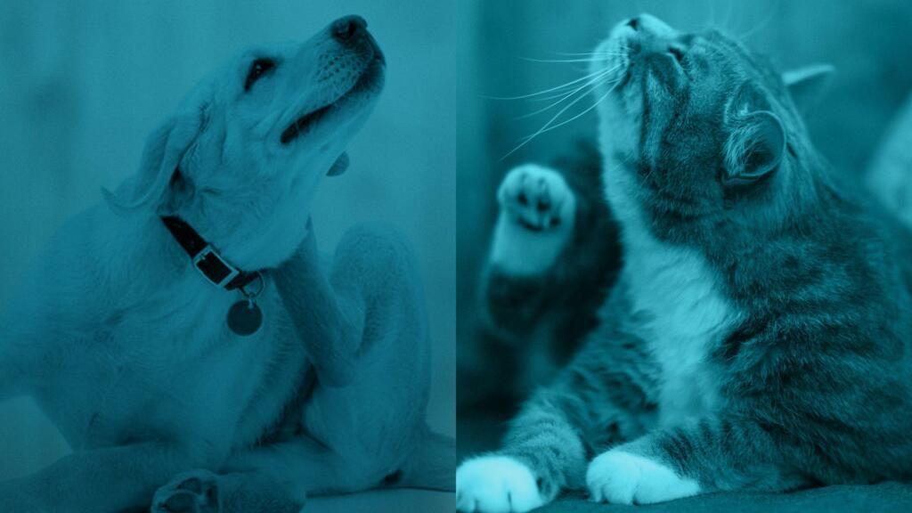 pulci nel cane e gatto