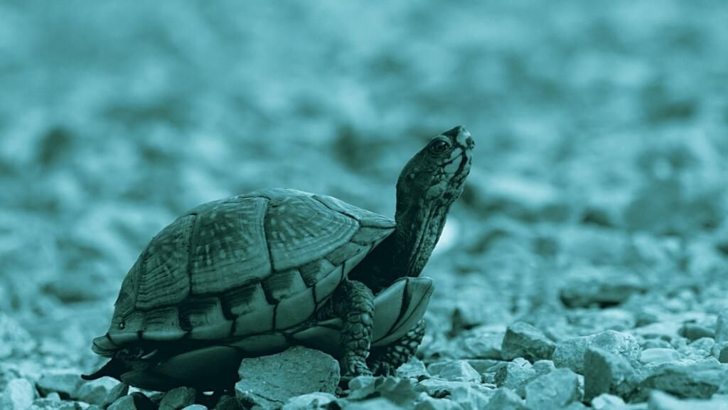 tartarughe e testuggini problemi