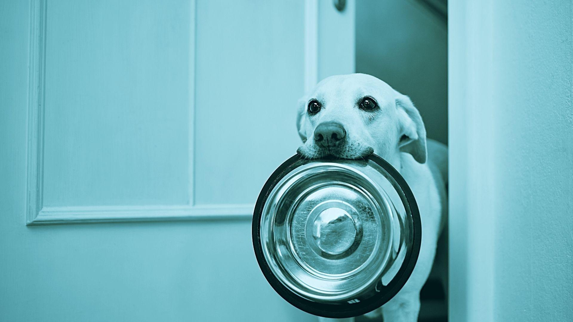 alimentazione veterinario nutrizionista