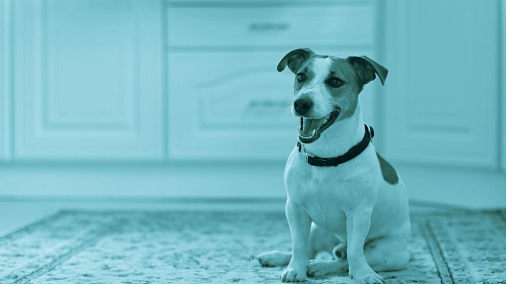 lussazione rotulea mediale cane