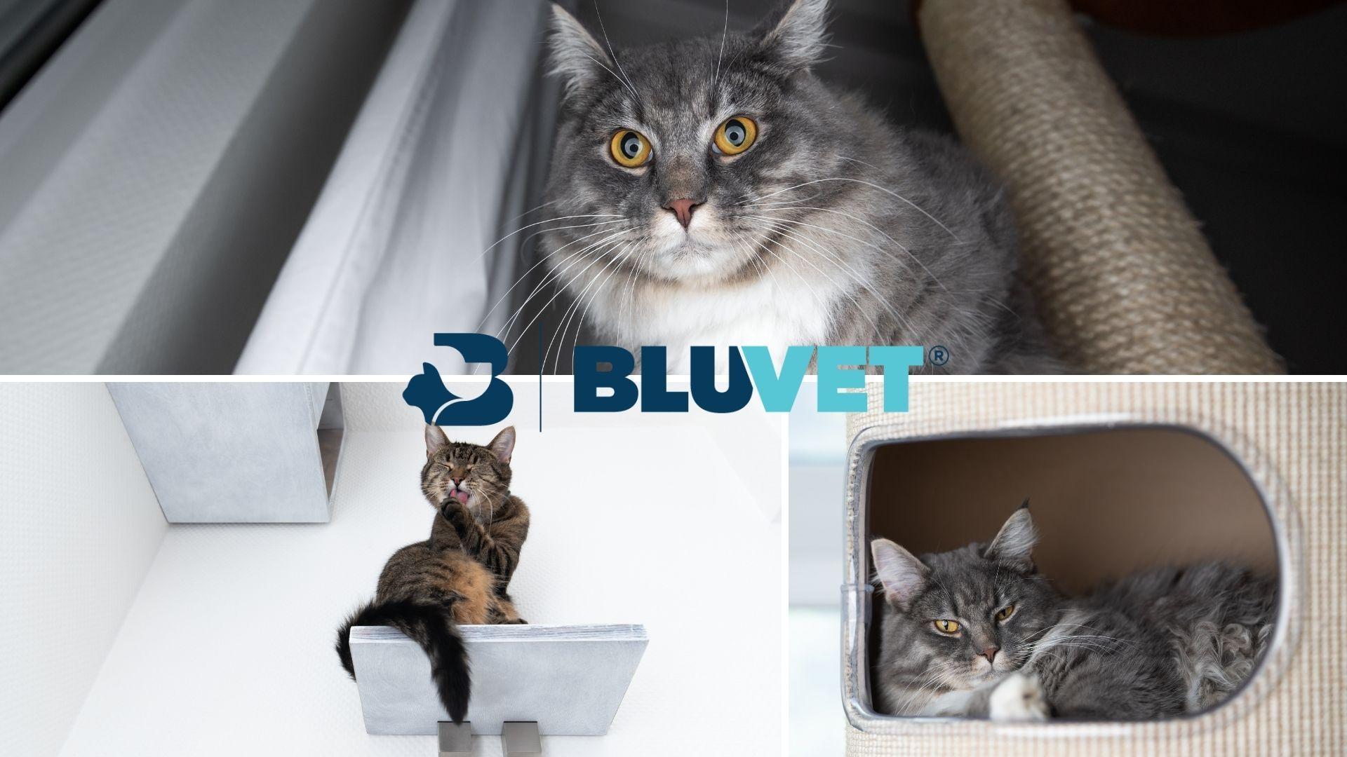 arricchimento ambientale gatto