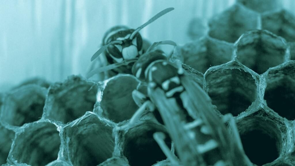 Cosa fare in caso di puntura di vespe e api nel cane