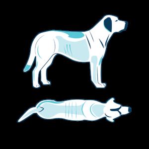 cane lievemente sottopeso 3 di 9