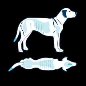 cane molto sottopeso 1 di 9