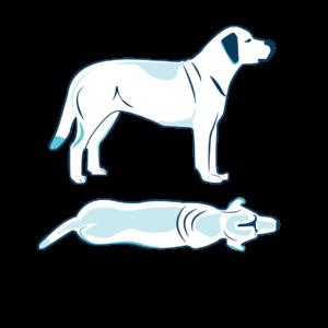 cane normopeso 5 di 9