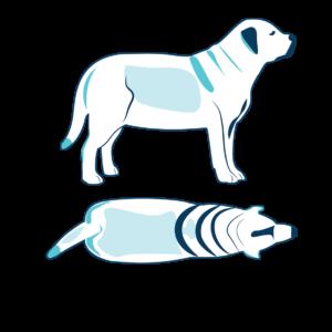 cane obeso 9
