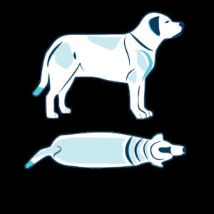 cane sovrappeso 7