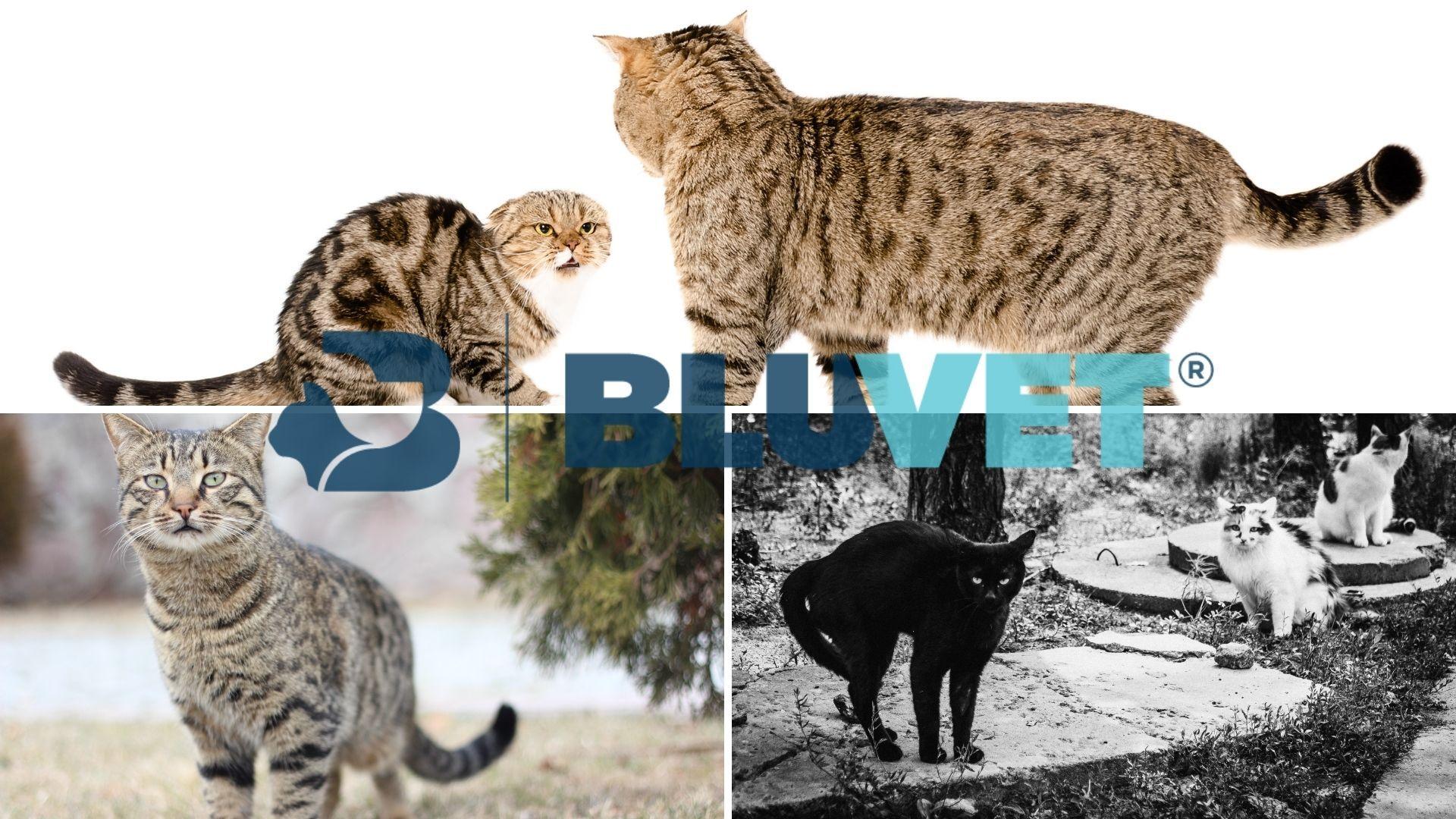 comprendere i gatti dalla posizione della coda