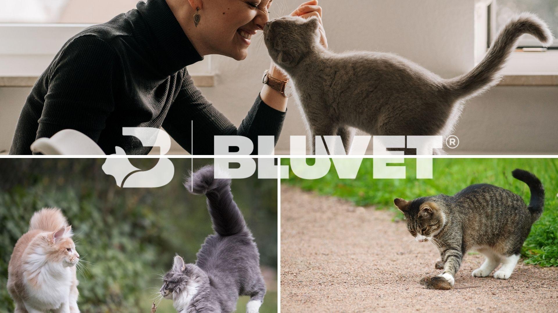 cosa vuole dire il gatto con la coda dritta