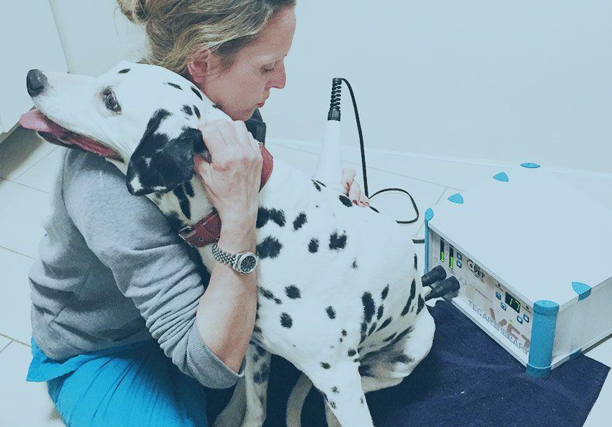 fisioterapia veterinaria a Milano clinica veterinaria santangelo