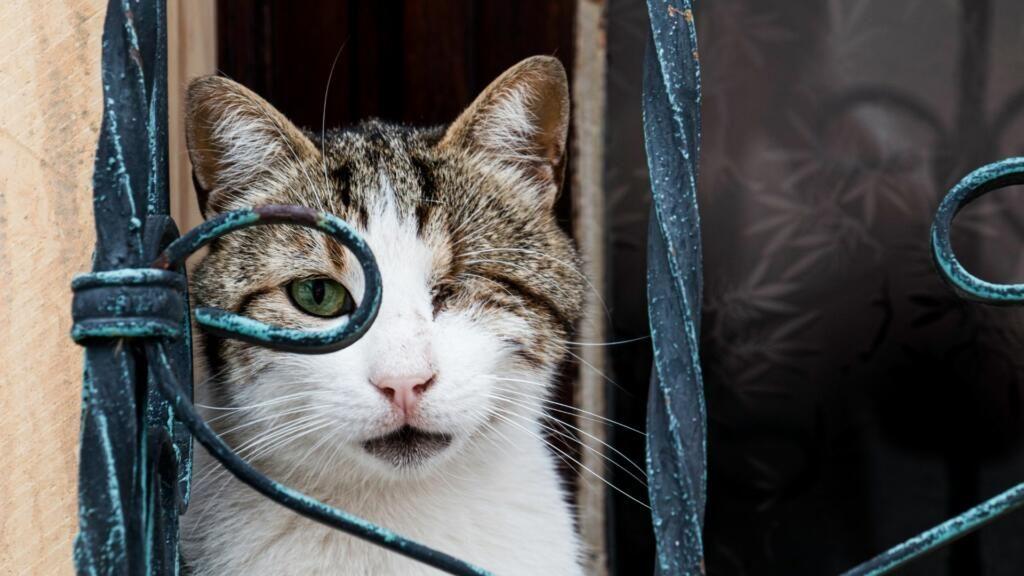 ipertensione gatto problemi oculari