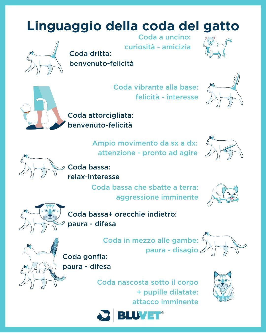 linguaggio della coda del gatto