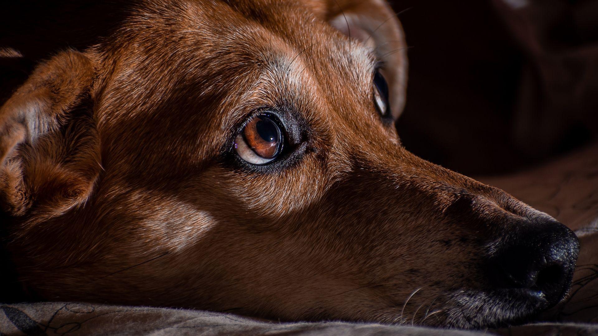 piometra nel cane sintomi