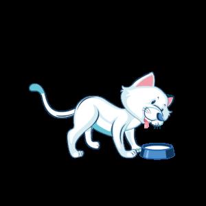 gatto con ciotola