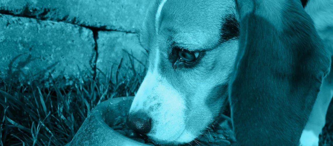 allergie alimentari cane