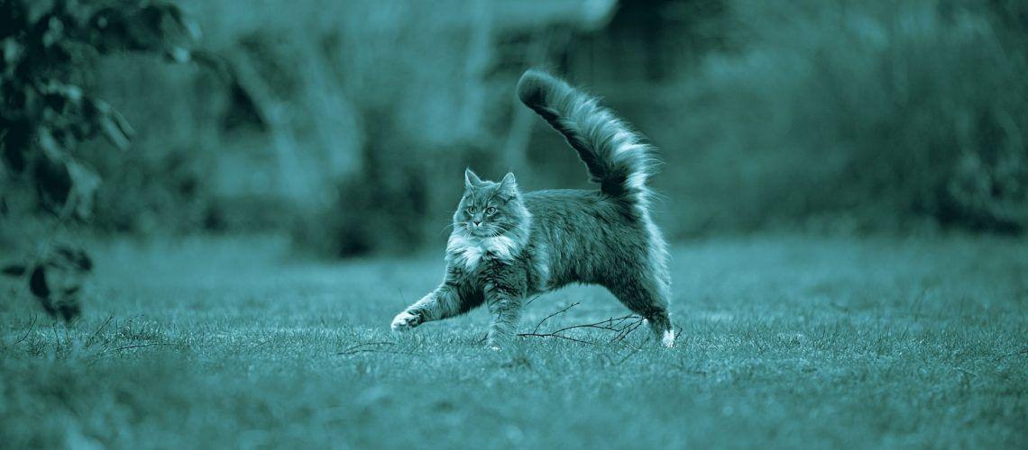 come interpretare il movimento dei gatti