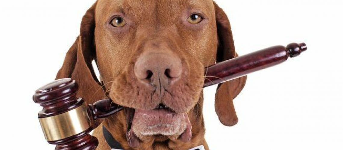 dog as judge.jpg.653x0 q80 crop smart