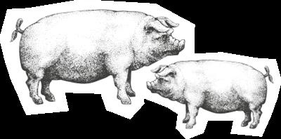 icona-benessere-animale_liberta_4